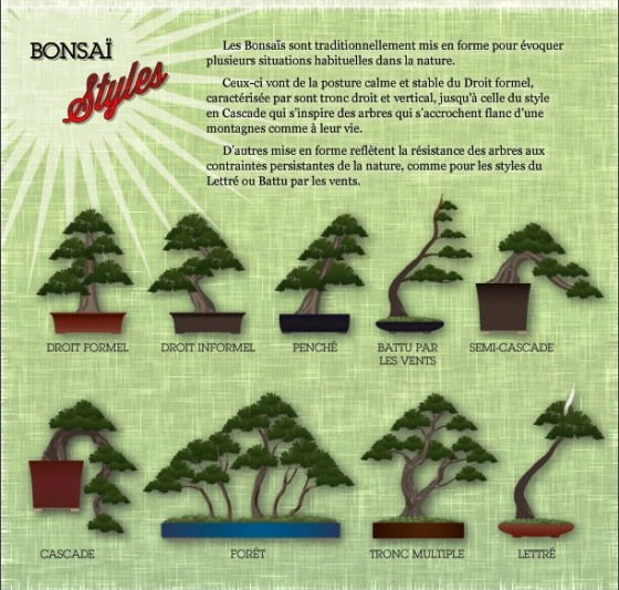 bonsai-infographie - Copie (2)