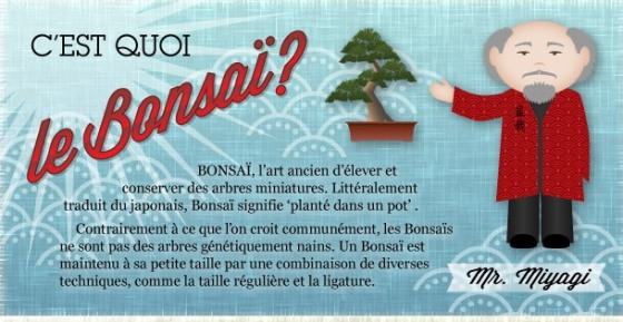 bonsai-infographie